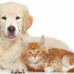 """Don't we love to see cats and dogs happy together?  It reminds us that """"enemies"""" can get along!"""
