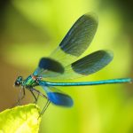 Dragonflies represent transformation so beautifully!